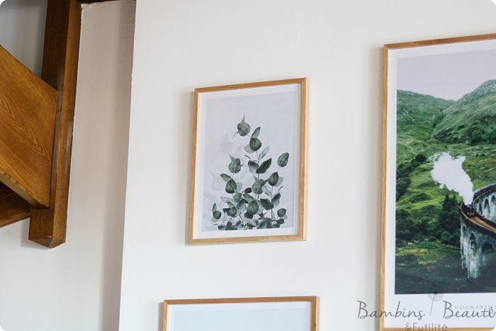Affiche Eucalyptus