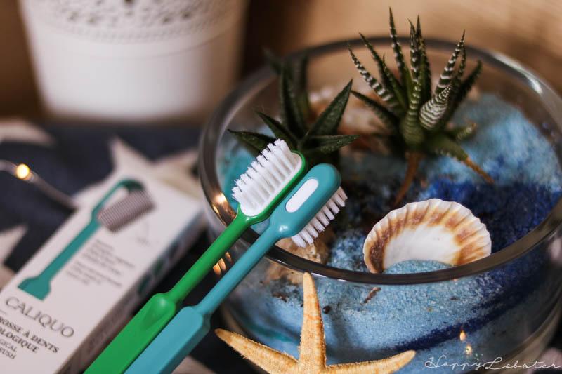 Brosse à dents à têtes rechargeables
